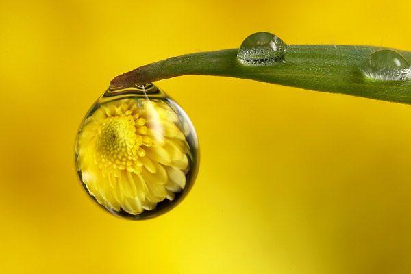 dew drop reflection
