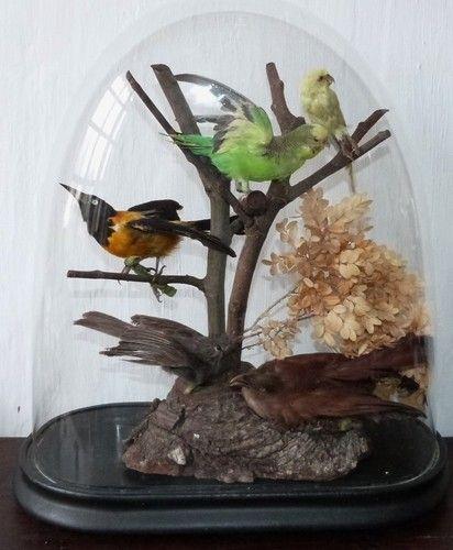 Globe aux oiseaux cabinet de curiosit napol on iii napol on iii napol on et cabinet de - Globe cabinet de curiosite ...
