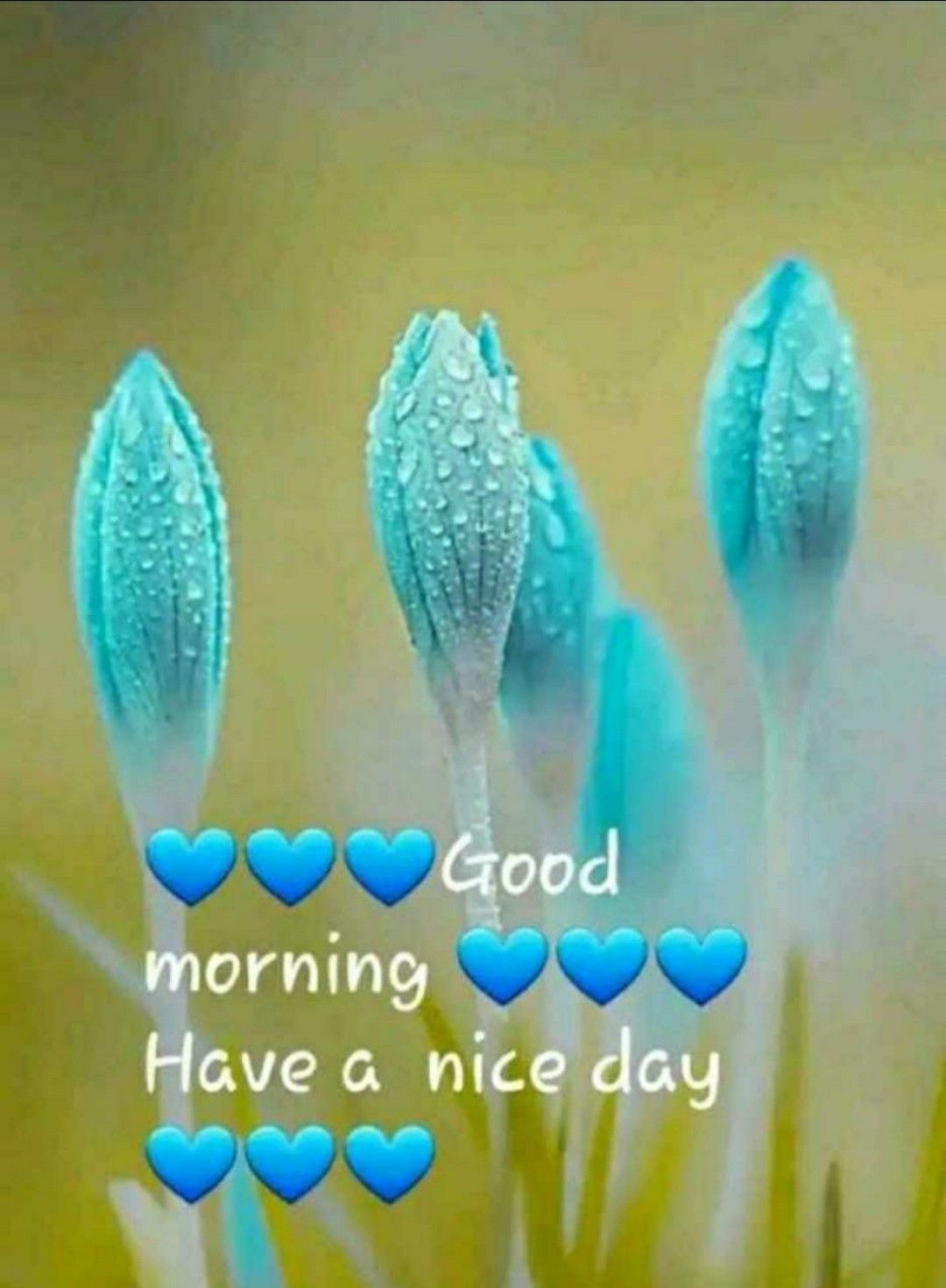 Pin By Scorpio Roy On Good Morning 2 Good Morning Images Morning Images Nature