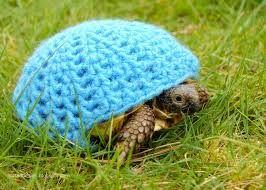 Resultado de imagen para turtle clothing
