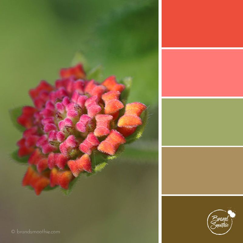 Tropical Orange colour palette by Brand Smoothie
