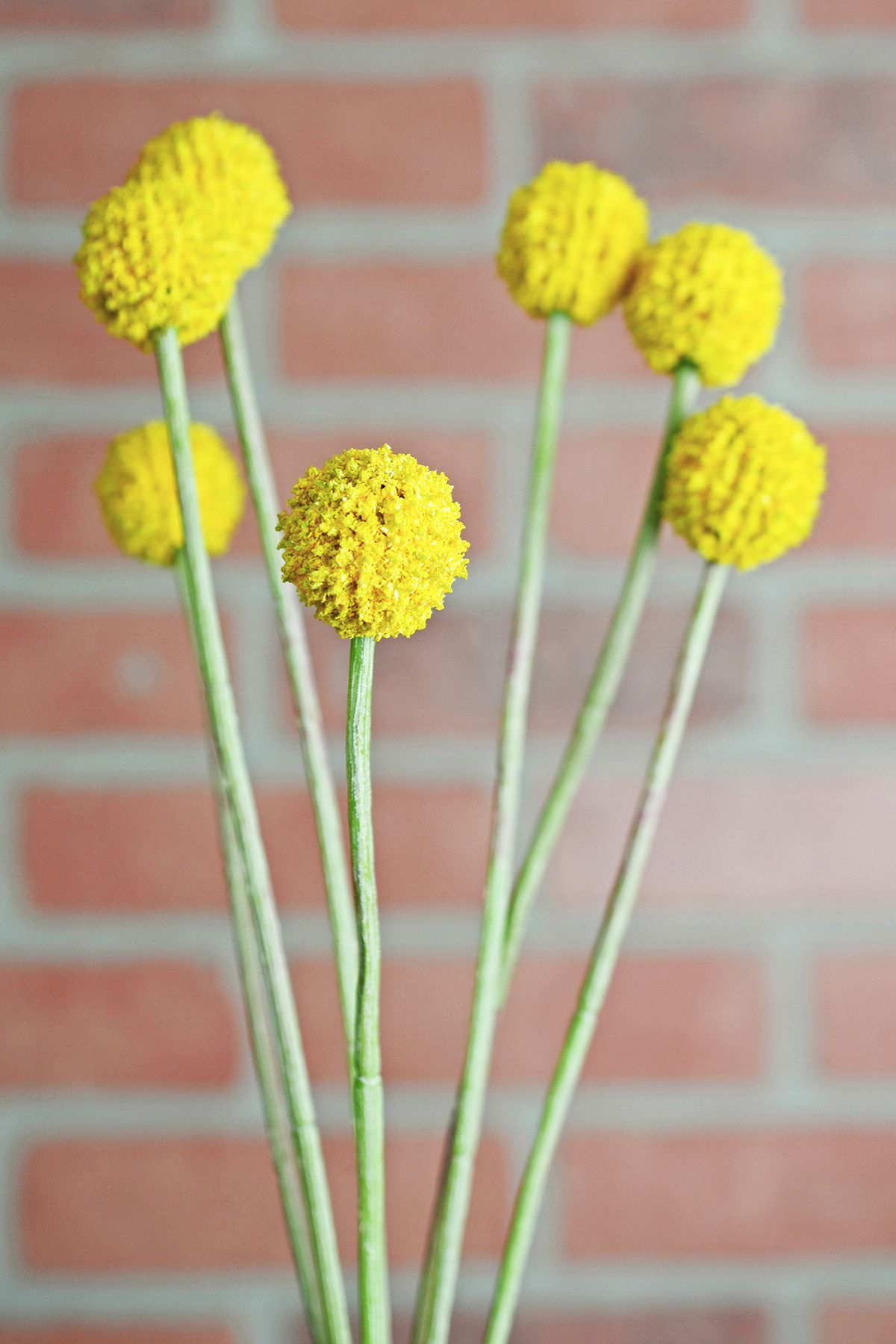 24 Silk Billy Button Craspedia Flower Spray Billy Buttons Flower Spray Flowers