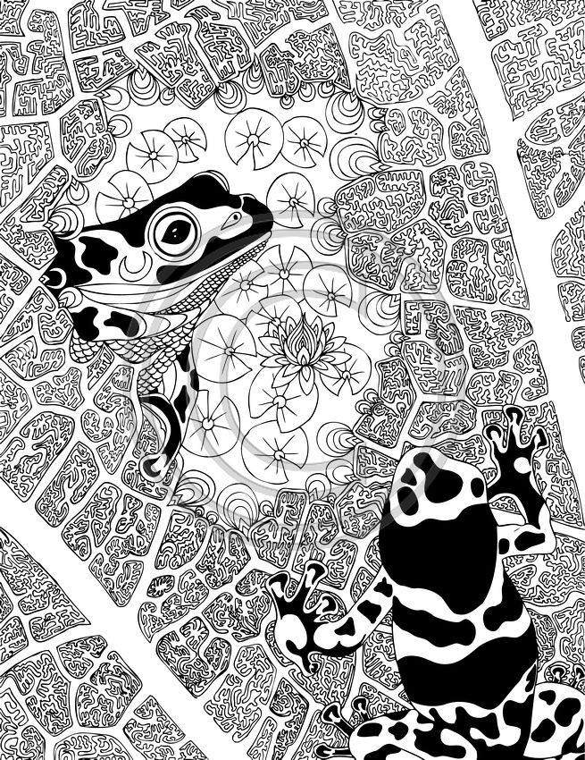Phil Lewis Art Coloring Books for Adults Frog coloring