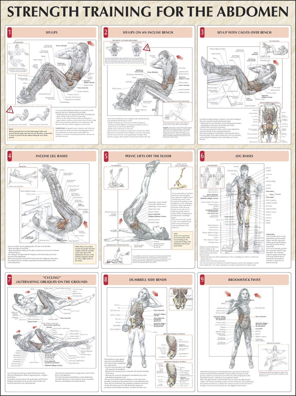 Strength Training For The Abdomen Chart | Fitness & Health ...