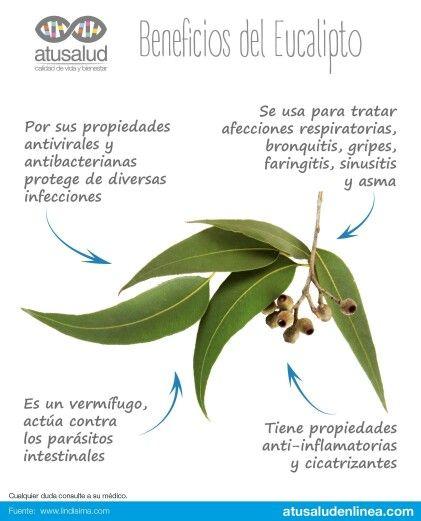 Fayna Saavedra Natural Medicine Green Tea Benefits Detox Water Recipes