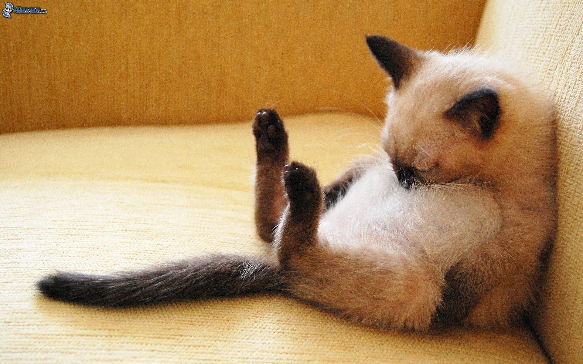 Tired so Tired | Animals / Pets | Pinterest  Tired so Tired ...