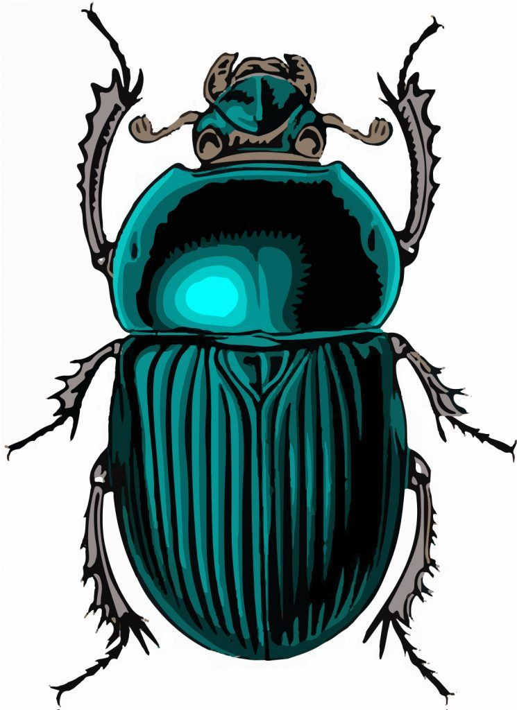 Scarab Beetle Egyptian Symbol Of Strength Egypt Pinterest