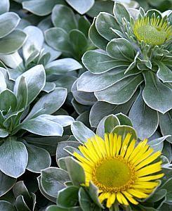 65 Best Plants For Narrow Planters Ideas Plants Planters Growers