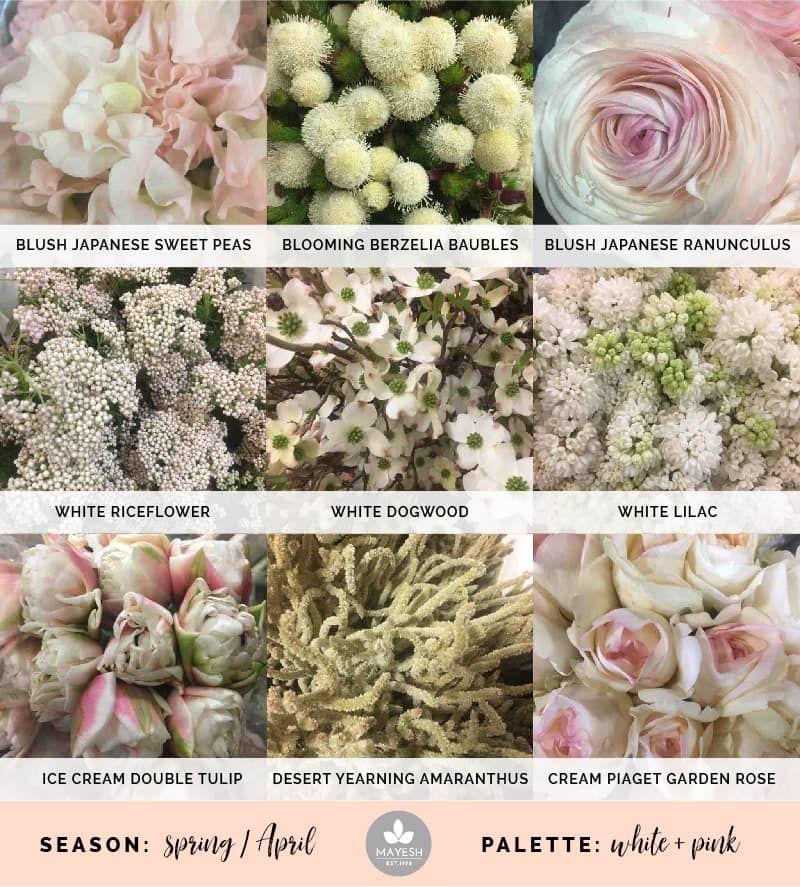 Cooler Picks Flower Guide Blush Wedding Flowers