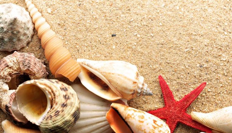 معرفة تفسير حلم صدف البحر في المنام للحامل Sea Shells Starfish Shells