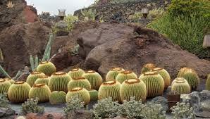 Resultado de imagen para jardin de cactus lanzarote