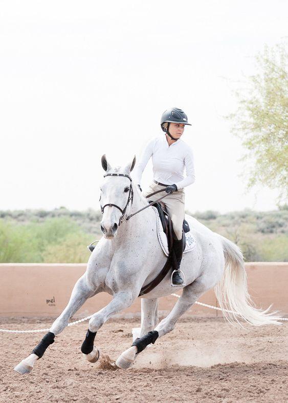 Idee Von Anna Preissl Auf Sportpferde In 2020 Pferde Englisches Reiten Pferdeliebe