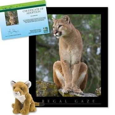 Large Mountain Lion Stuffed Animal Google Search For My Boys