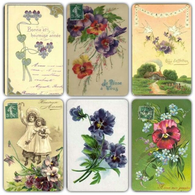 Vintage violets and pansies