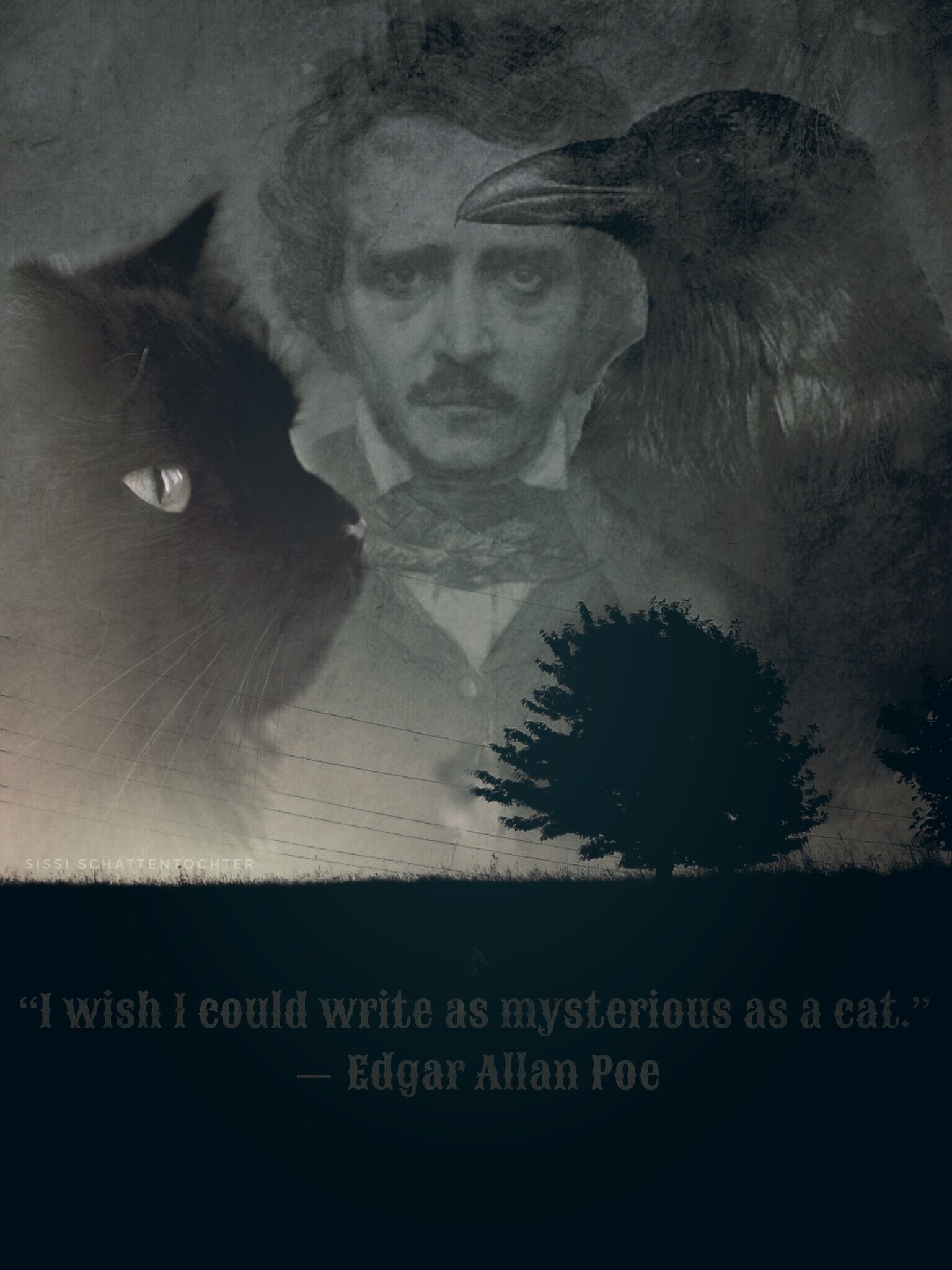 """""""I wish I could write as mysterious as a cat.""""  ― Edgar Allan Poe"""
