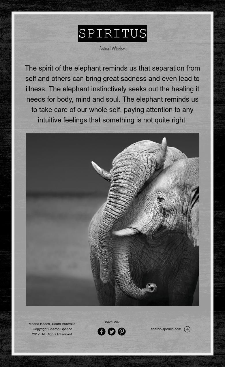 Spiritus Animal Wisdom The Elephant Quotes Animals Elephant Wisdom