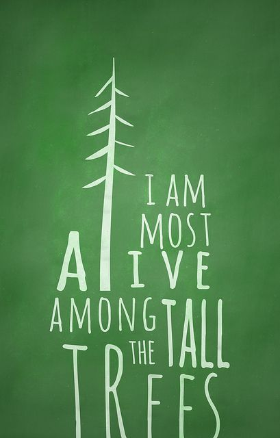 ALIVE AMONG THE TALL TREES