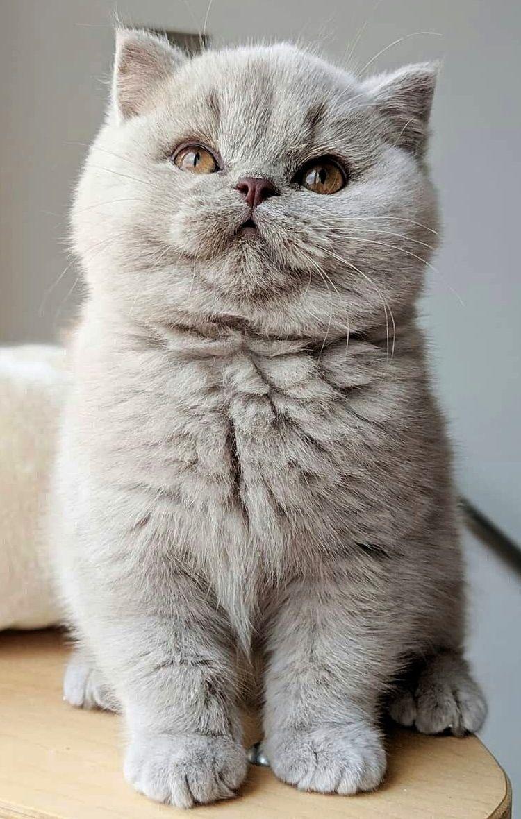 Pin By Janina Vinitskaya On Too Cute So Beautiful Cute Cats And Dogs Cat Breeds Cute Cats