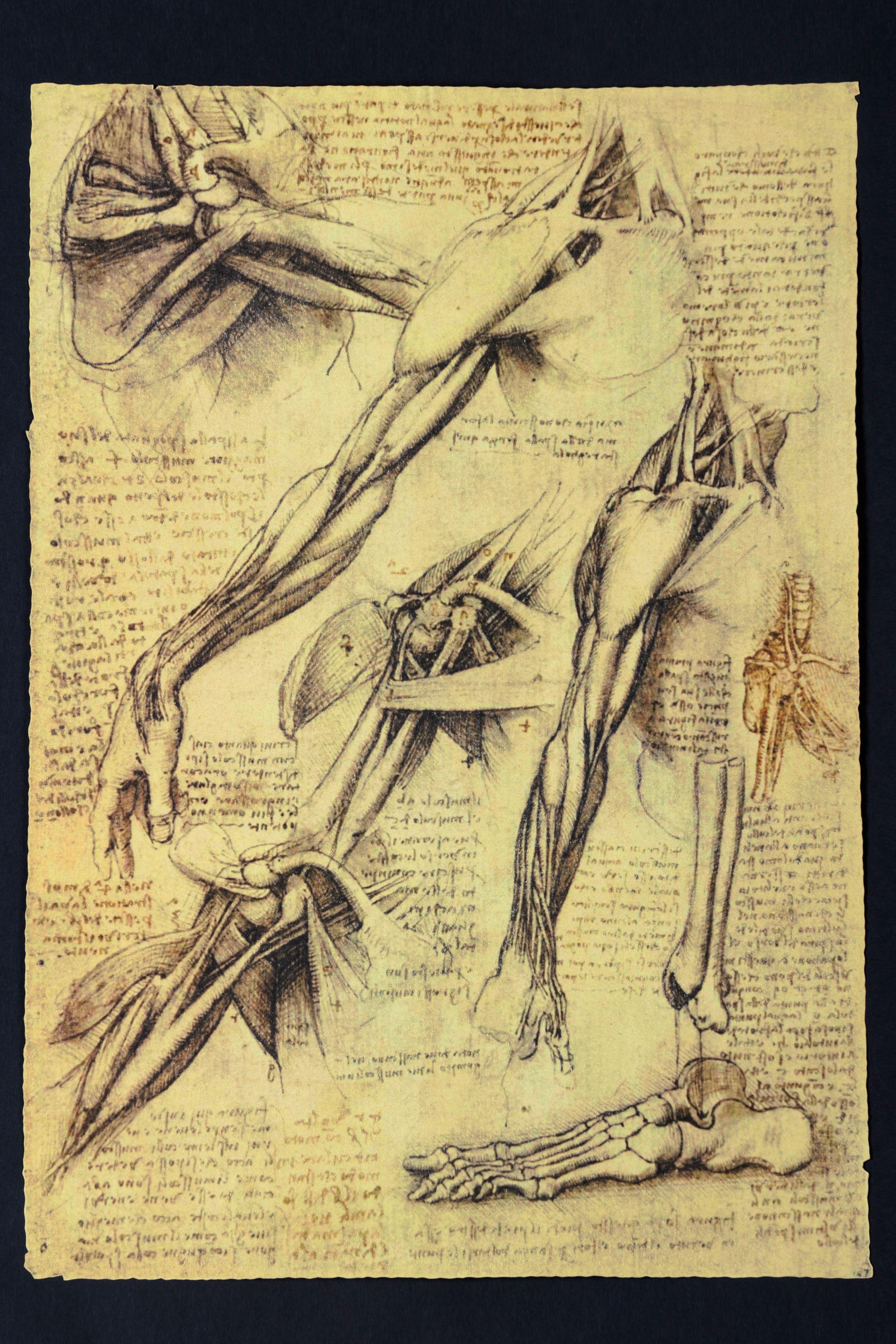 Leonardo da Vinci, Braccia | DRAWINGS | Pinterest