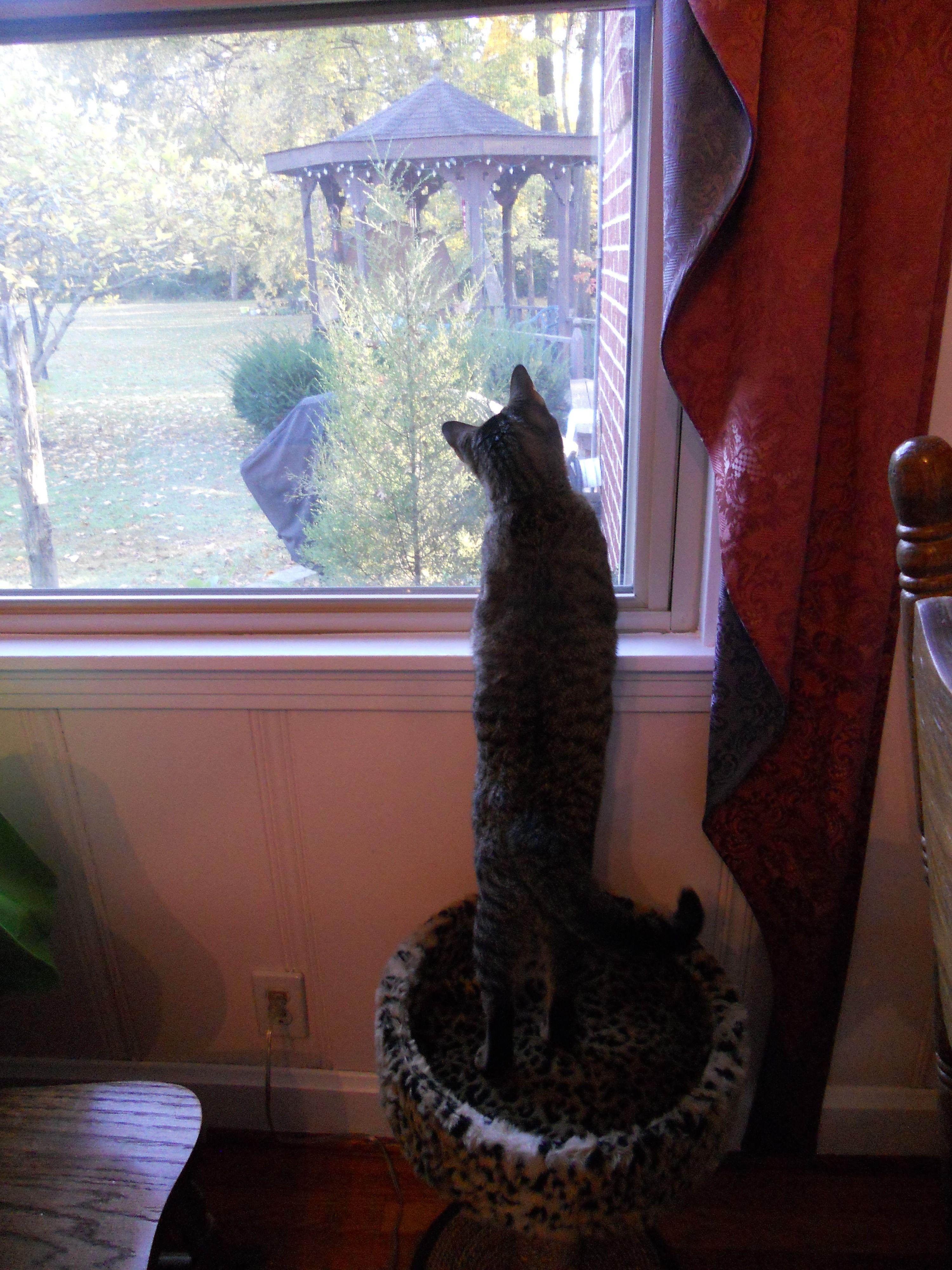 Our daughter moved back home September 2011 bringing her kitten, Violet with her.