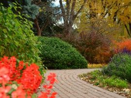 Jardin lleno de flores