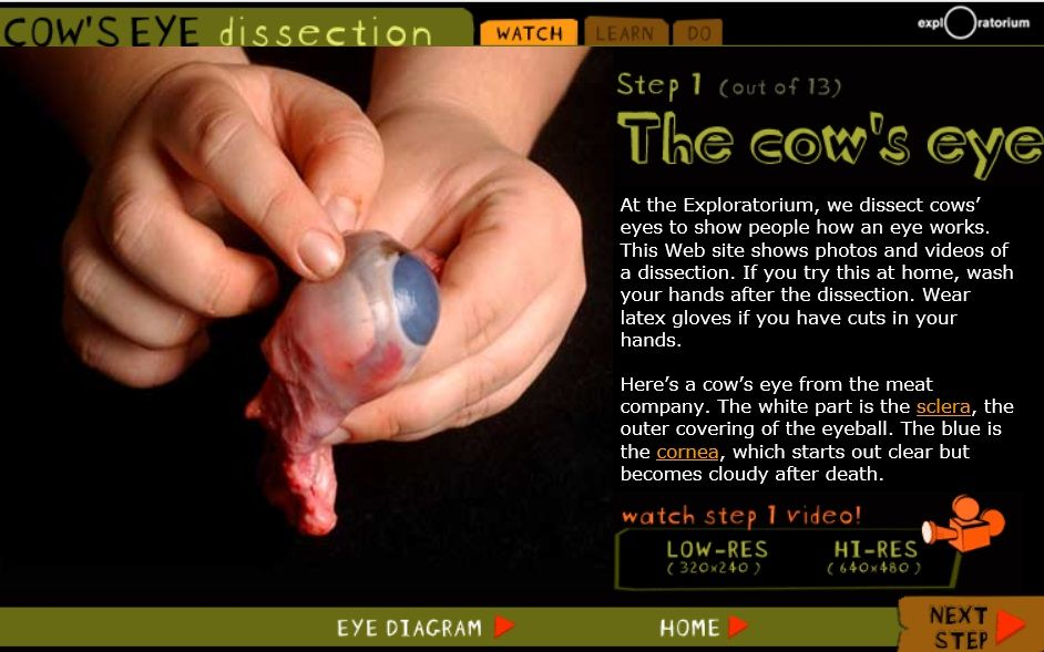 video steps showing cow eye dissection for kids http://www ...