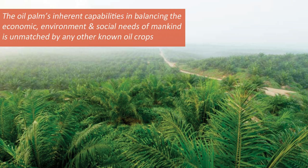 Since the majority of the United States' palm oil comes