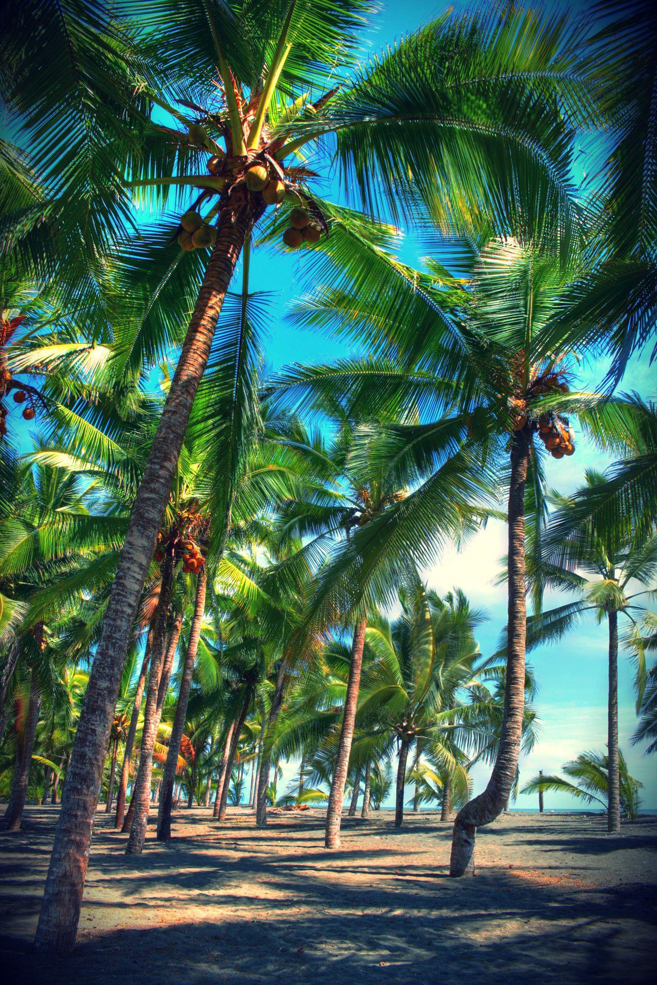Coco Beach Panama An Exclusive Sensational