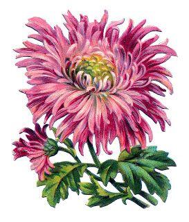 Цветы,фрукты, ягоды. Элементы для творчества -2. Старинные ...