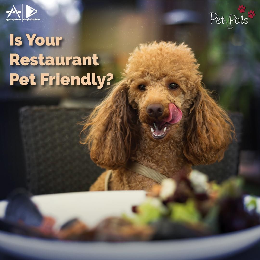 Many pet parents want to take their pets to restaurants with