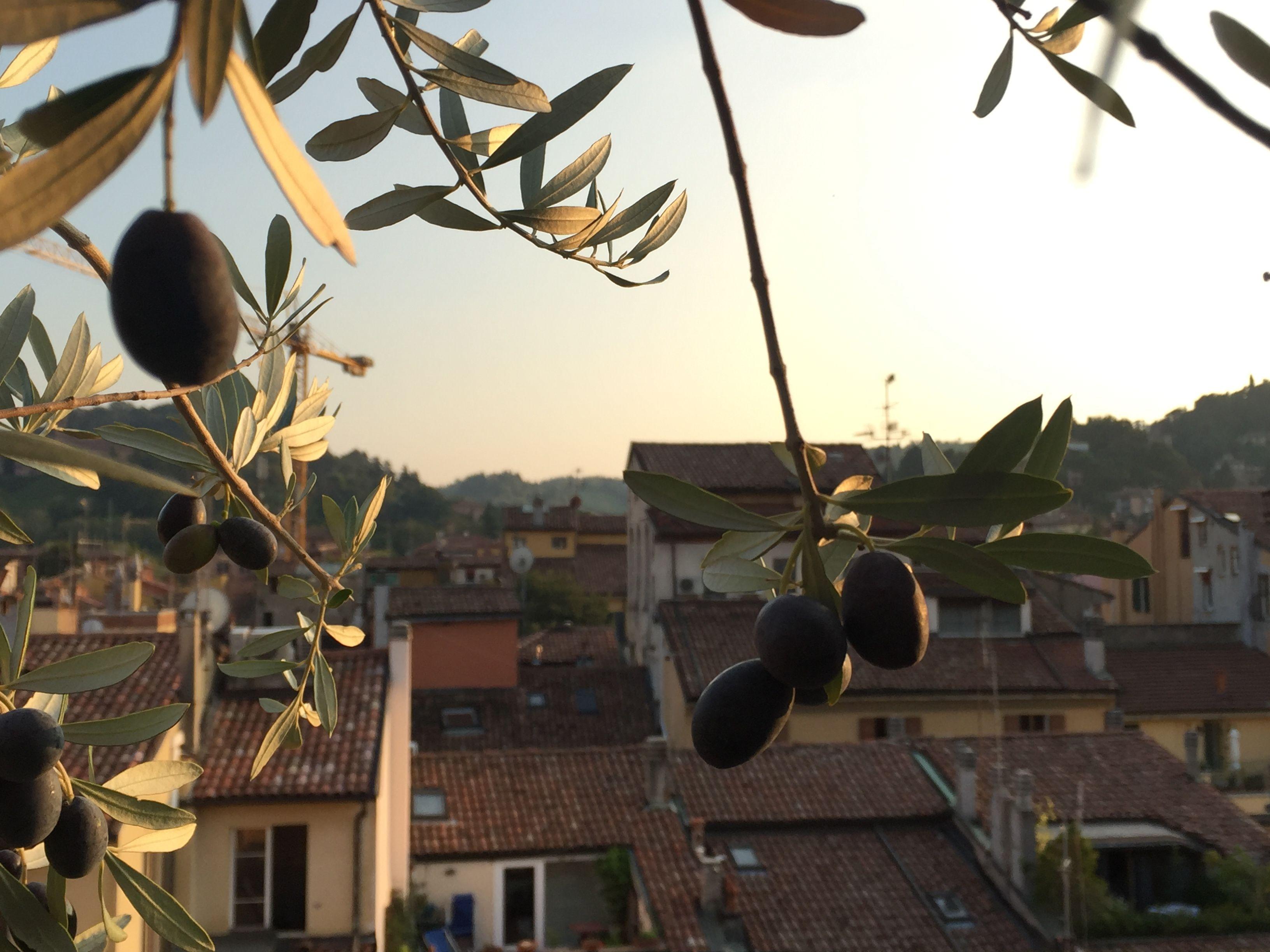 Pin Di Hotel Touring Bologna Su Terrazza Mattuiani