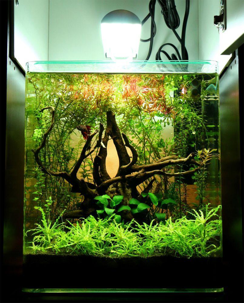 Aquarium / Planted Tank / Aquascape Purchase driftwood for ...
