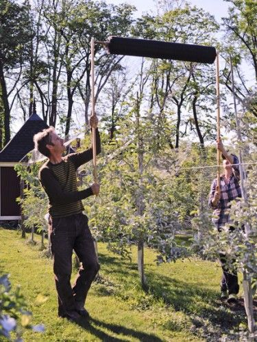 Netting On A Roll To Cover Protect Fruit Trees From Birds