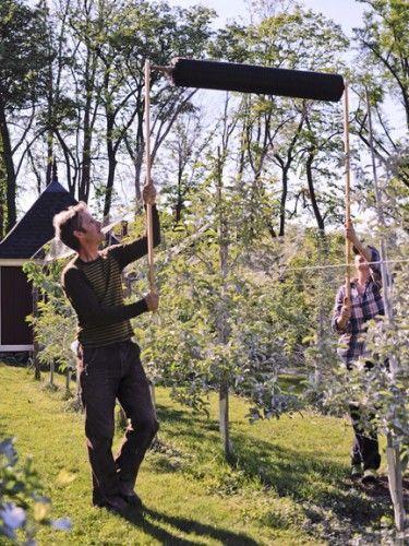 Choosing A Suitable Shrub Fruit Trees Fruit Garden Berry Garden