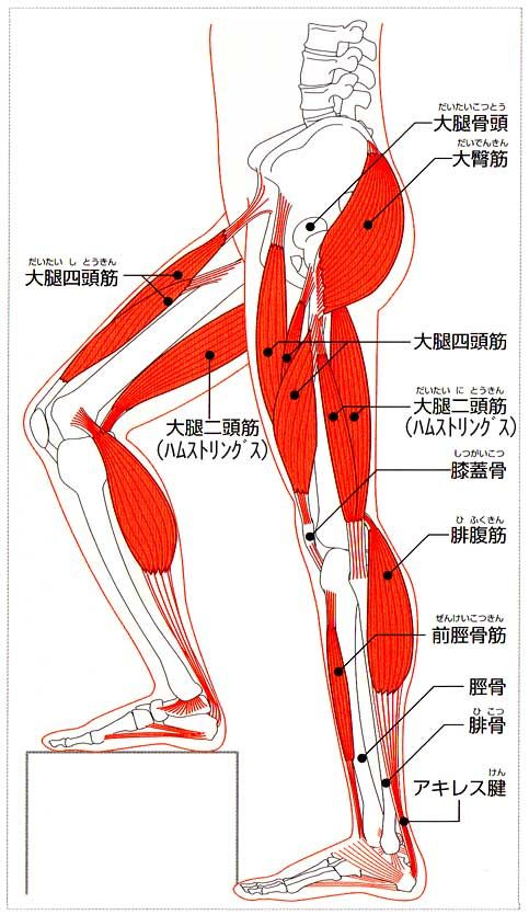 Learn More about Body」おしゃ...