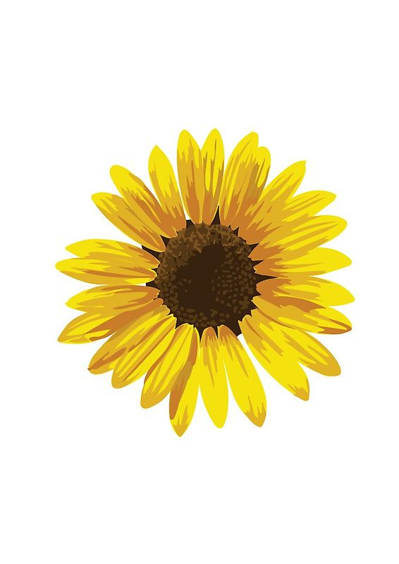 Sunflower Love Watercolor Sunflowers Floral Clip Art Wedding