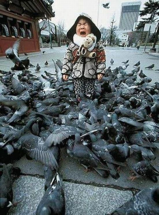 me so scared  -  I'm not gonna lie though, I've made the same face with a lot less birds.