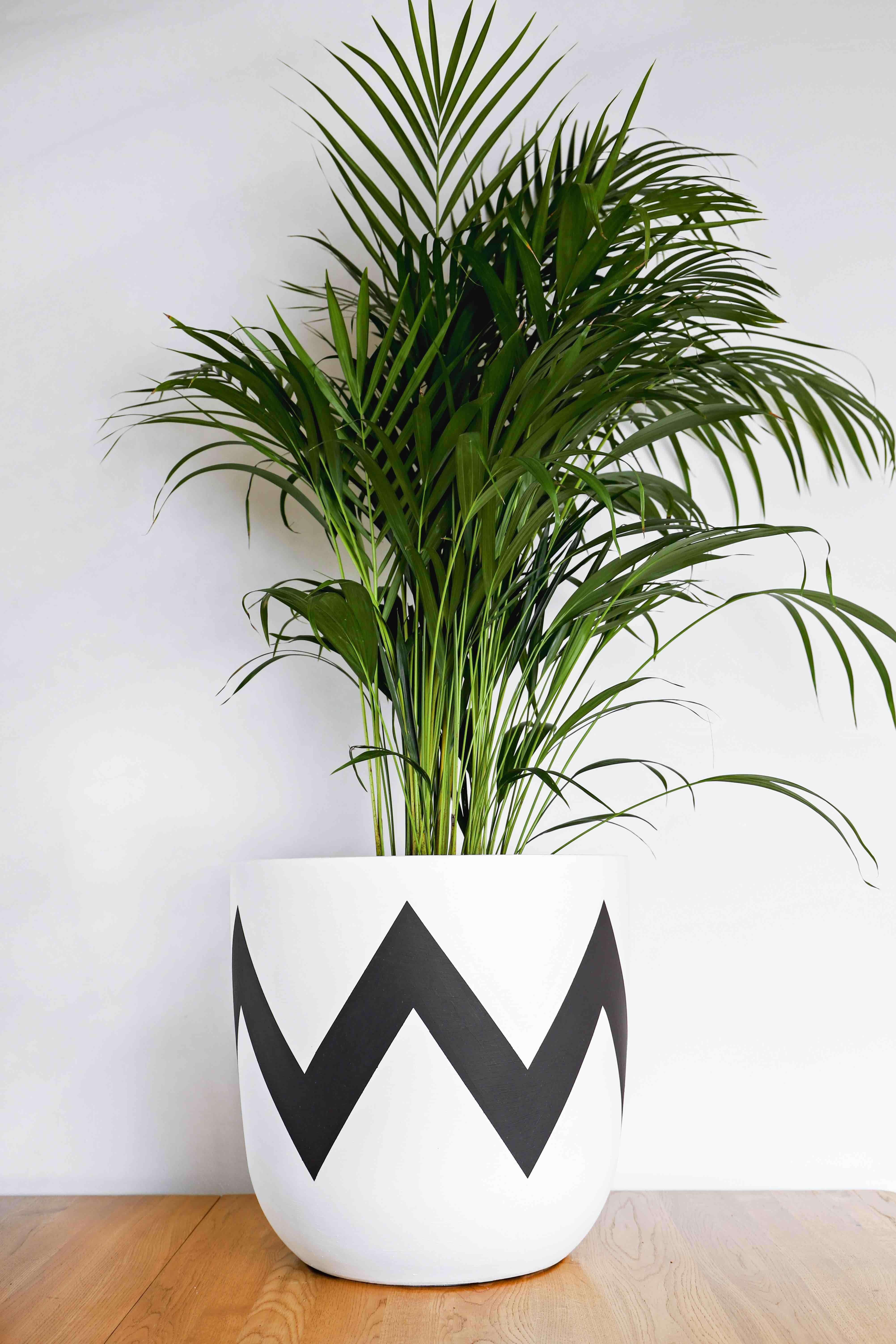 white plant pots on pow pots ziggy hand painted modern plant pot plant pot design painted plant pots plant pot diy pow pots ziggy hand painted modern plant pot plant pot design painted plant pots plant pot diy