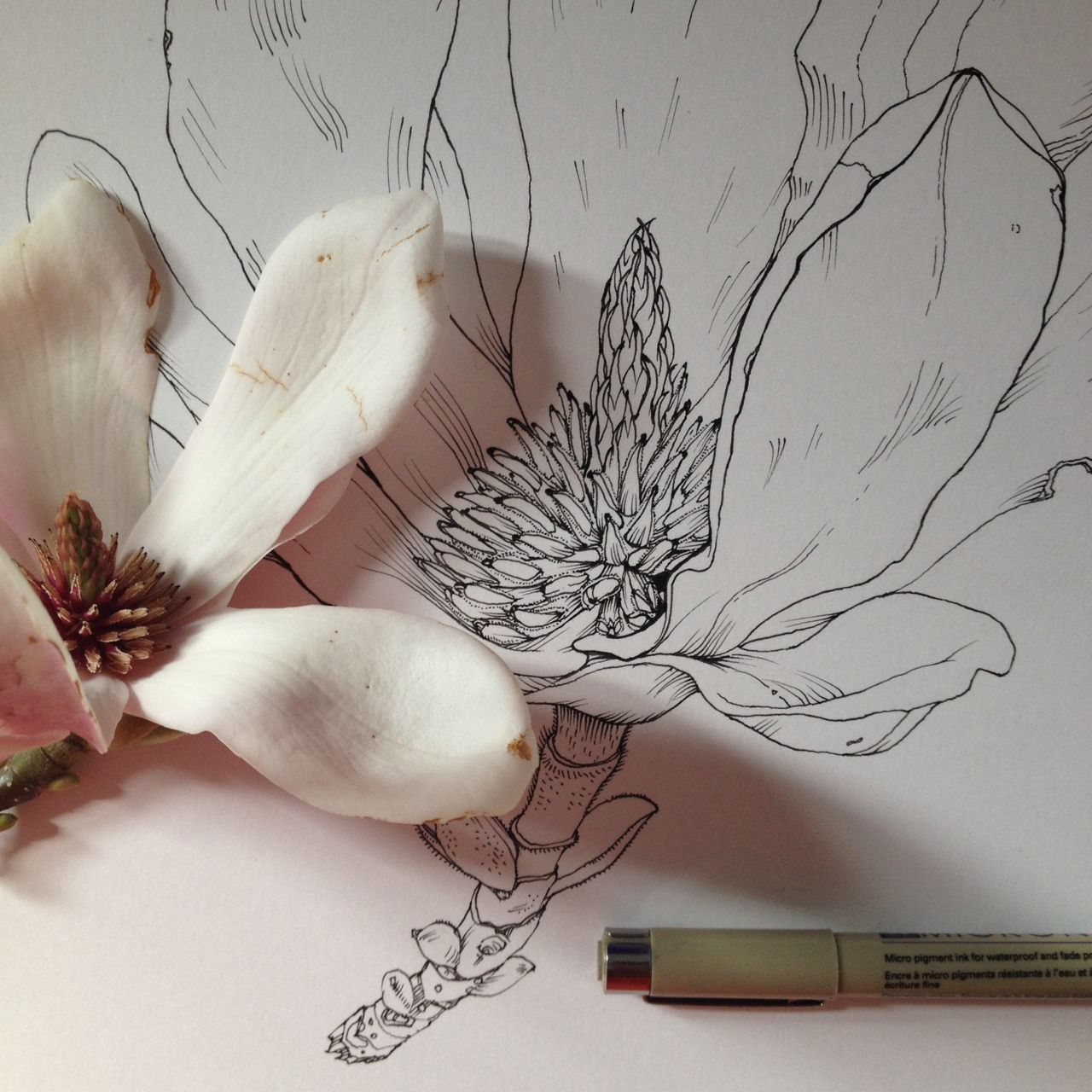 Fleur drawing pinterest noel badges and drawings