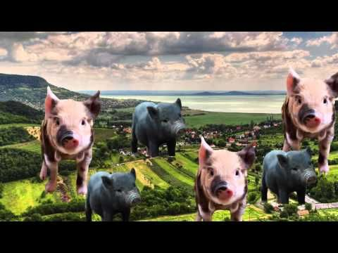 Gmo Pet Admission Essay Micro Pig Persuasive Essays Genetically Modified Food Pro And Con