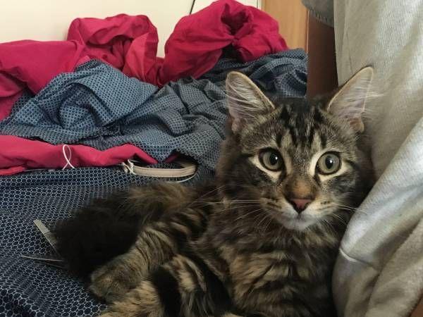 Prev Next Favorite This Post Lost Cat In Hamden Ct
