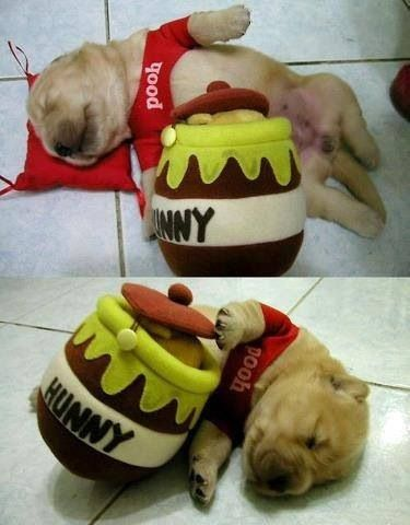 d4144d75d41ec Seriously!! This is the cutest thing!! Puppy Costume, Cute Dog Costumes