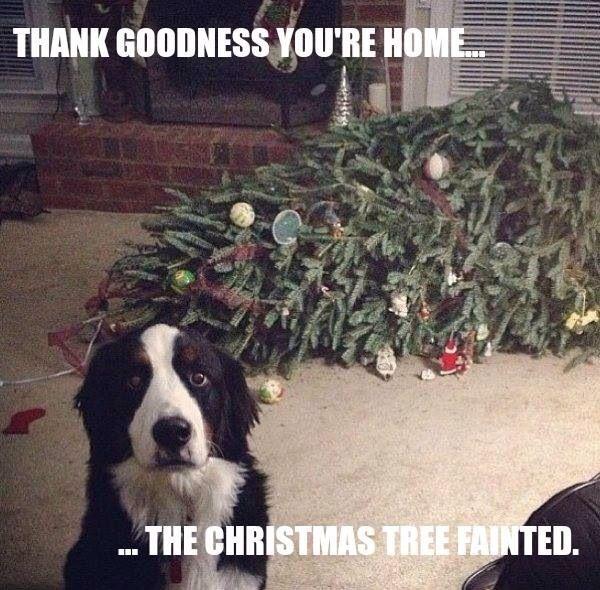 Dog Christmas Tree Meme.Dog Christmas Tree Meme Funny Christmas Humor Funny