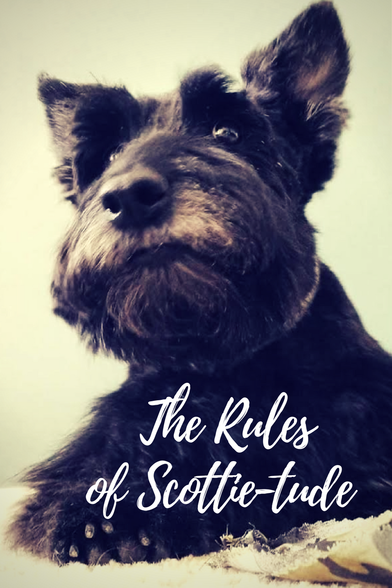 The Rules Of Scottie Tude Scottie Scottie Dog Rescue Dogs Mom