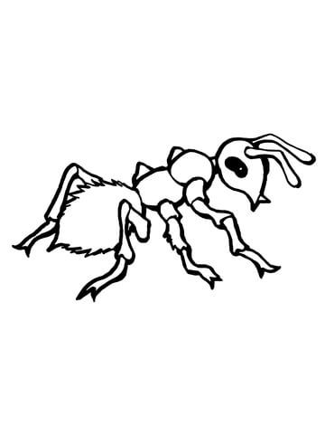 Realistic Ant Coloring Page Dibujos
