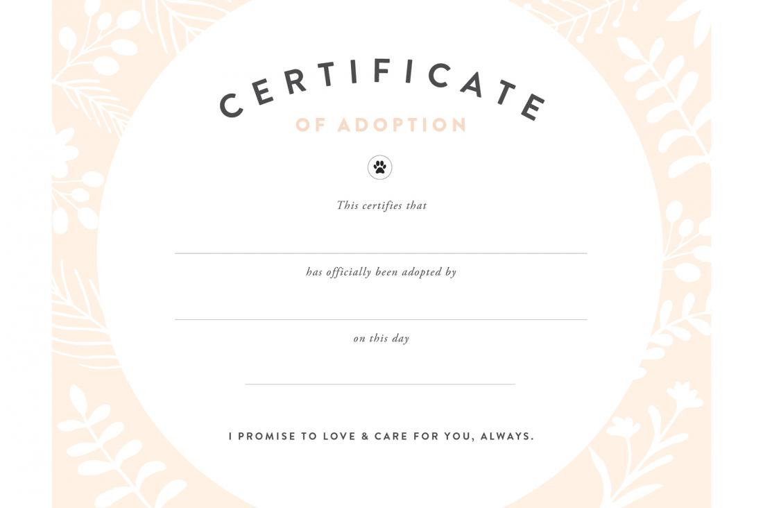 Diy Rescue Dog Adoption Certificate Diy Recipes Pretty Fluffy Pet Adoption Certificate Dog Adoption Certificate Adoption Certificate