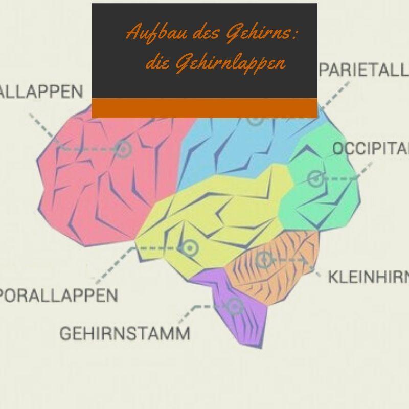 Gehirnregionen Funktionen