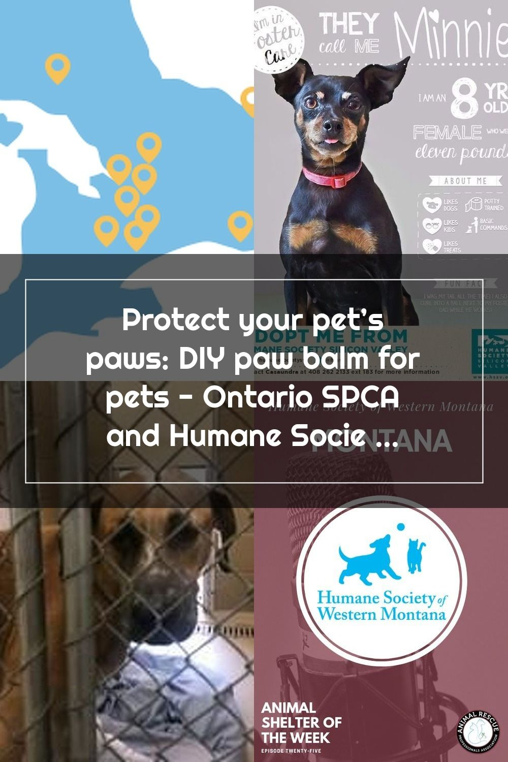 Protect Your Pet S Paws Diy Paw Balm For Pets Ontario Spca And Humane So In 2020 Paw Balm The Balm Spca