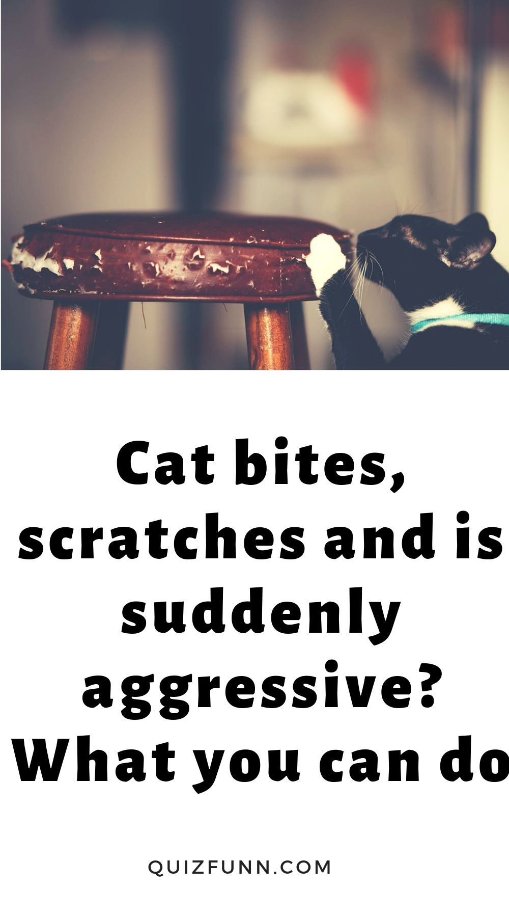 Cat Bites Scratches And Is Suddenly Aggressive What You Can Do Your Cat Suddenly Bites And Scratches You Without Warning It S Almost A Cat Biting Cats What You Can Do