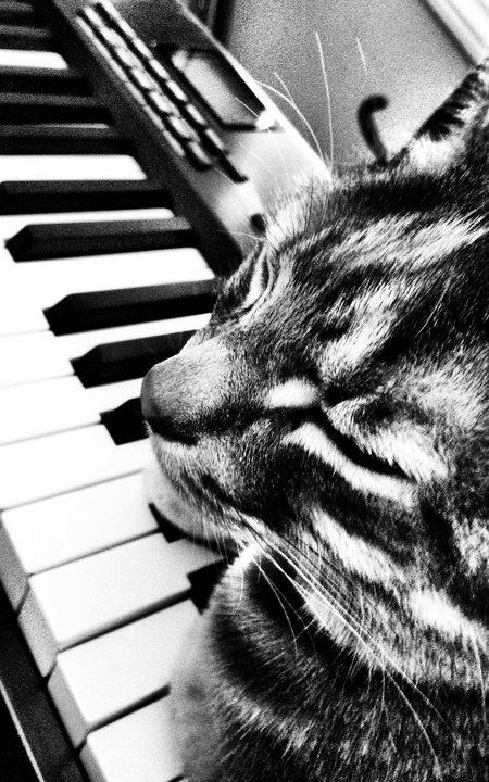 Taking a snooze on the keys!